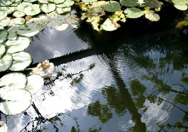 Naturnaher Seerosenteich als Ort der Naturbeobachtung.