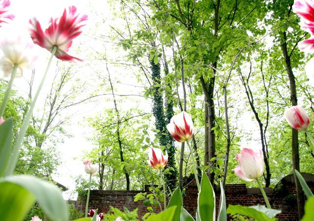 Pflanzenverwendung. Frühblüher bereichern jeden Garten.