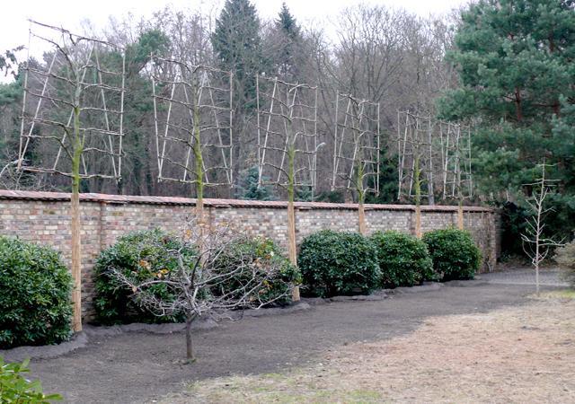 Eine Ziegelmauer wird durch Spalierlinden und Rhododendren begleitet.