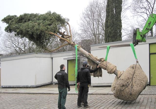 Großbaumpflanzung.