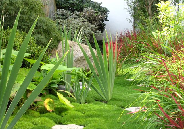 Rasenartiges Sternmoos bedeckt den Boden.