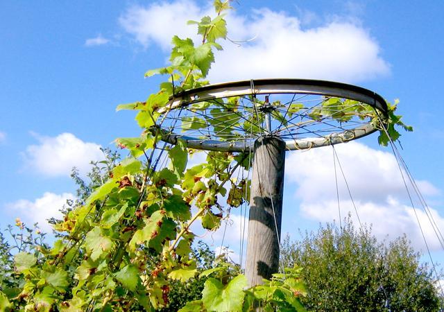 Praktisch-schöne Kletterhilfe für die Weinrebe