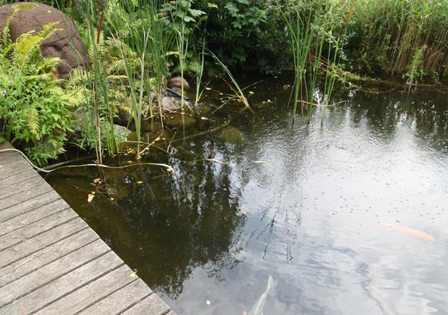 Naturnaher Teich mit Holzdeck.