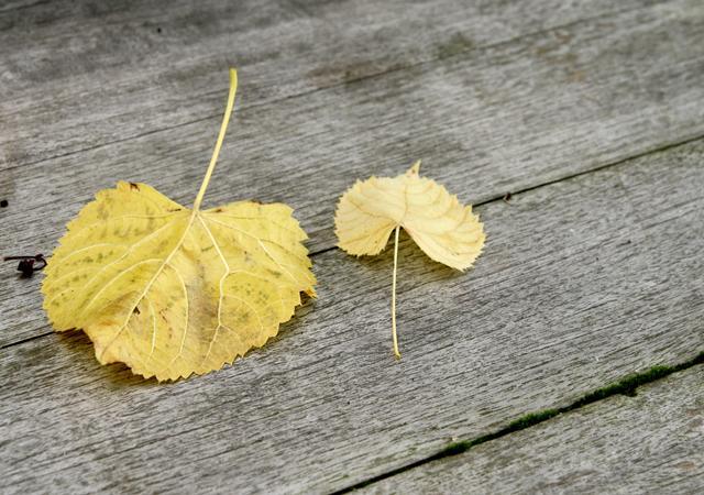 Holz steht der lebenden Pflanze sehr nah, daher besteht bei einem Holzdeck schon durch das Material eine enge Beziehung zwischen Natur und Bauwerk.