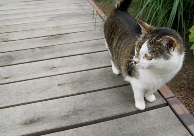 Eine Holzterrasse für zarte Katzenpfoten.