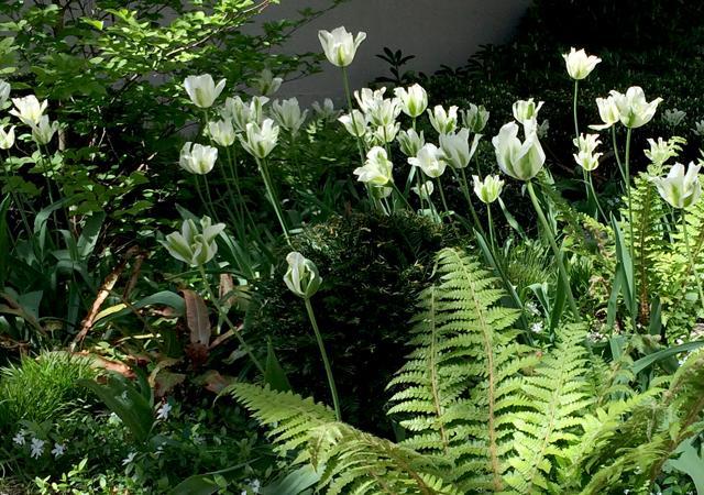 Tulpen im Skulpturengarten